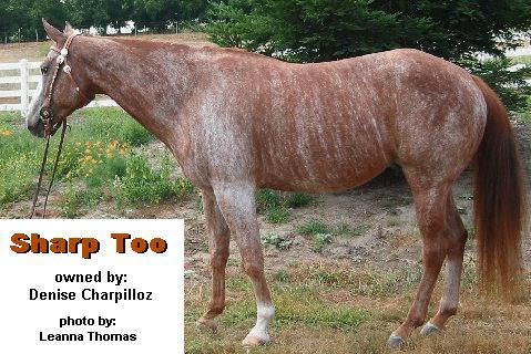 Brindle Horses A Rare Equine Coat Color