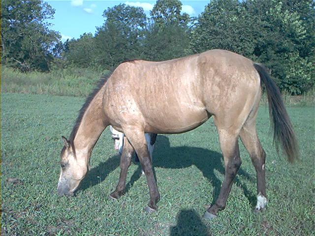 Recherche personne pour faire un portrait de ce cheval ! Stars05filly