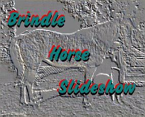Brindle Horse Slideshow