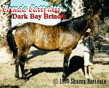 Picture of a Brindle Horse