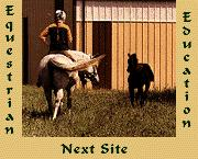 Next Equestrian Education Site